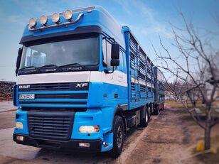 camion bétaillère PEZZAIOLI + remorque bétaillère